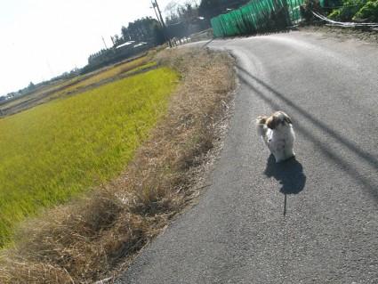 農道で散歩