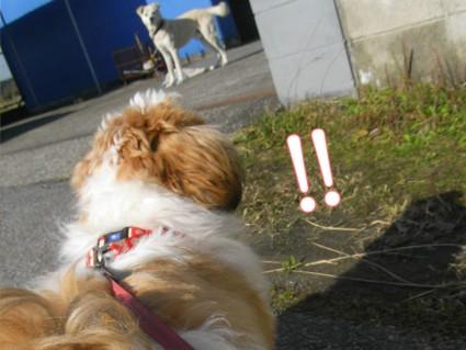 足の長い犬と出会う