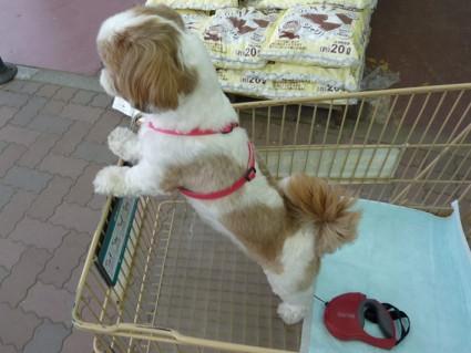 散歩&ショッピング