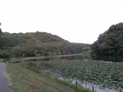 昭和の森で白鳥に会いました