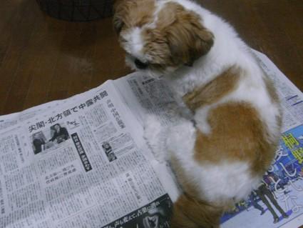 新聞紙の上に