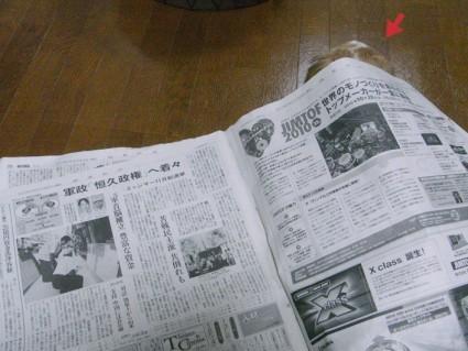 新聞紙ハウスの中のぽんず