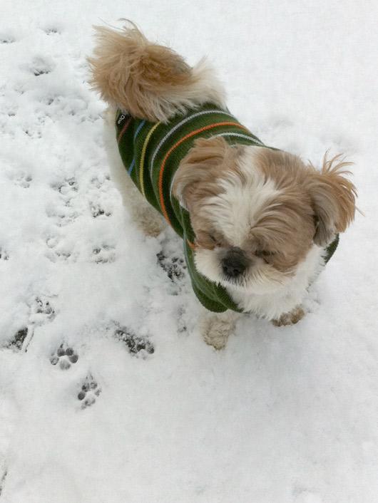 ぽんずの初雪