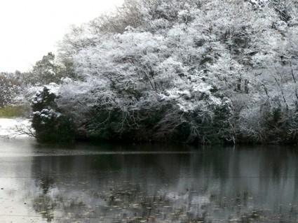 昭和の森の雪化粧