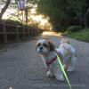 早朝の茂原公園です。