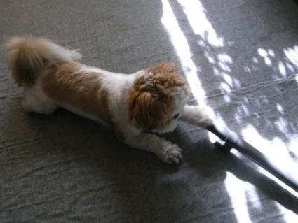 掃除機とシーズー犬