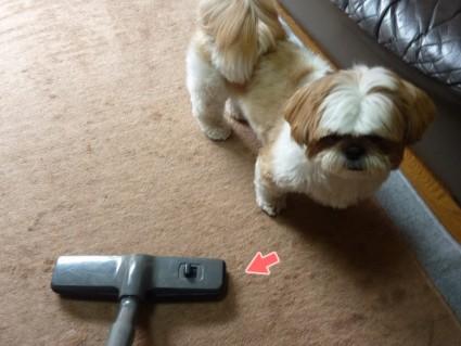 掃除機と格闘する犬