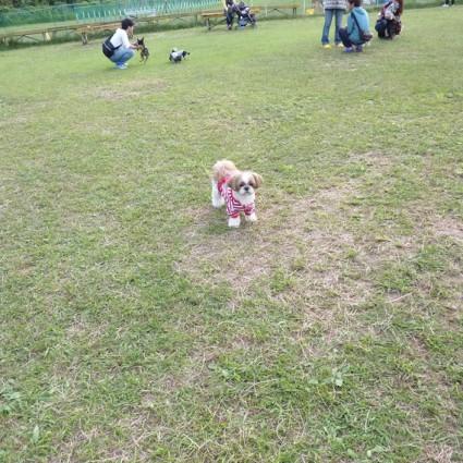 茂原ドッグラン『すいらんパーク』に!