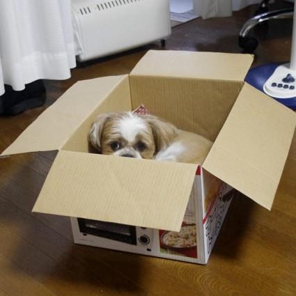 ダンボール犬