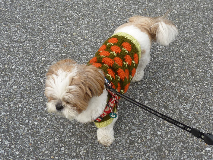 セーターを着て、もふもふ散歩。