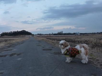 夕方に散歩