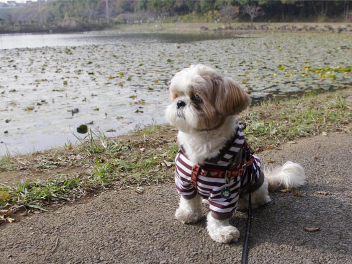 ぽんず2歳の誕生日、昭和の森で遊びました。
