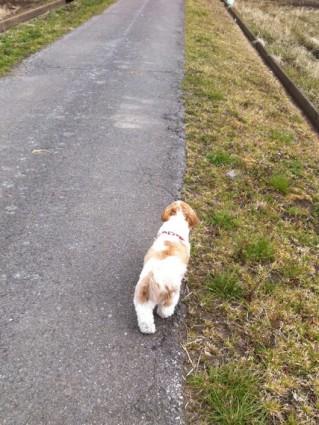 計画停電時に犬の散歩へ