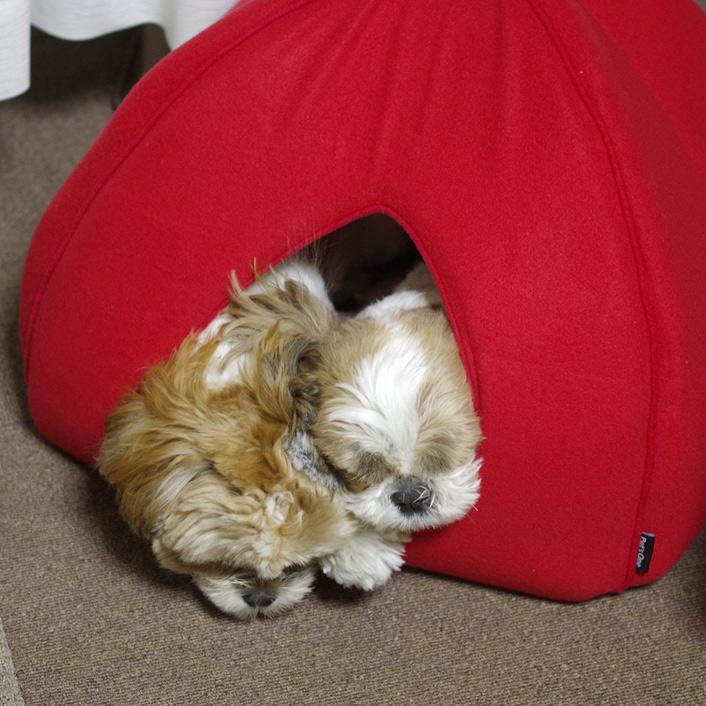 テント型ベッドその後
