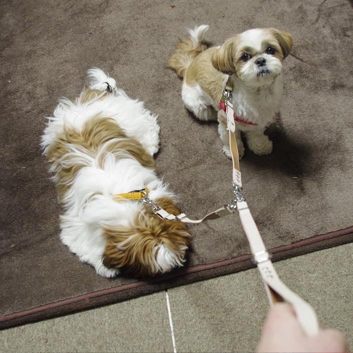 親子散歩、予行練習?
