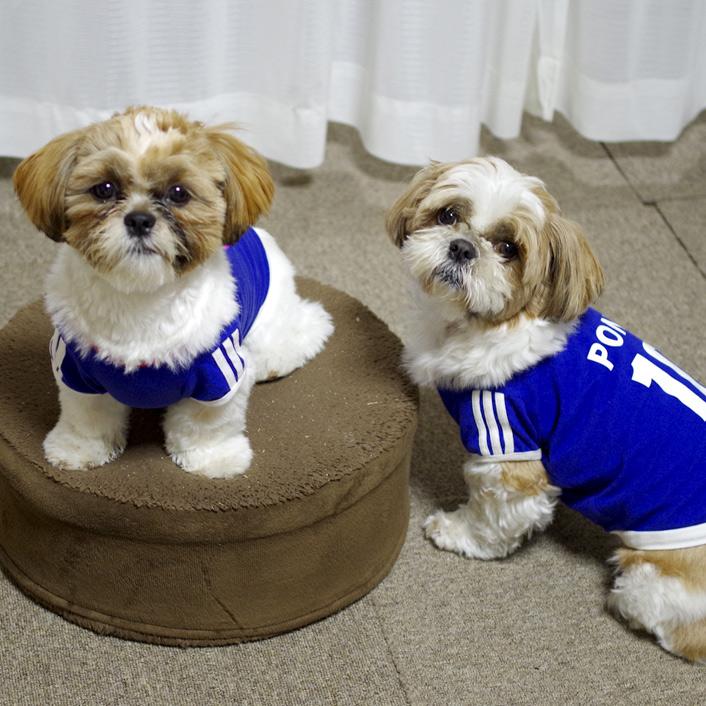 犬用サッカーユニフォームに新デザイン《ピンク》登場!