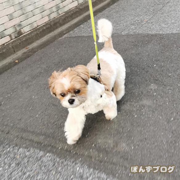 yorumaesanpo2