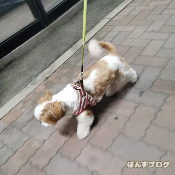 yorumaesanpo5