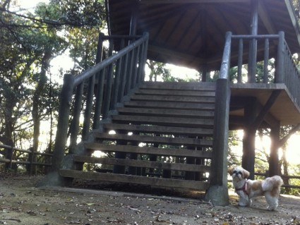 茂原公園にシーズー犬ぽんずを連れてきた