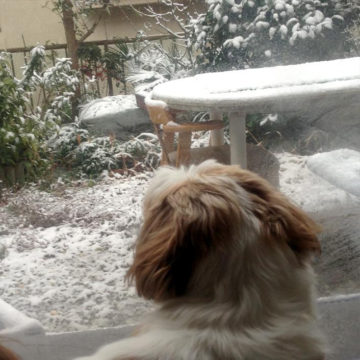 雪だるま君あらわる。