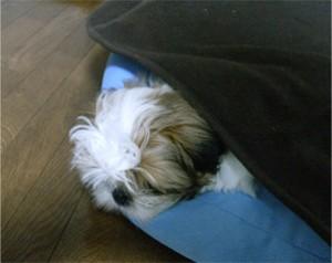 ぽんず睡眠中