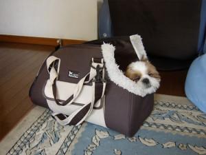 バッグで寝るぽんず